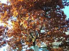 Fall Colors Boulder   DSCN0510