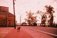 F1030012_lr (chi.ilpleut) Tags: kinmen taiwan island quemoy 2017 chinesenewyear lunar film expiredfilm kodakelitechrome100 iso100 crossprocessing 135mm 35mm analogue ilovefilms kodakfilm 底片 過期底片 柯達 記憶 蹤跡 金門鎏金之島kinmen 台灣 海島 島嶼 外島 回憶 走春 大晴天拍照天 晃晃 隨拍 我不在,就在去海邊的路上 海景 outing 冬陽 暖暖 暖陽 思念 漫步