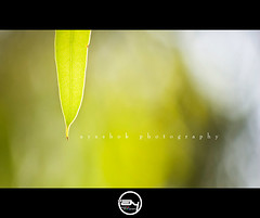The New Light in my life ! (ayashok photography) Tags: light green nikon bokeh newlight nikonstunninggallery nikond40 ayashok nikor55200mm