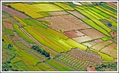 more colorful fields from Madagascar (Z Eduardo...) Tags: green landscape island colours rice fields frontpage madagascar aplusphoto platinumheartaward flickraward flickraward5 flickrawardgallery