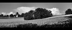 (Christoph Zurbuchen) Tags: summer bw landscape nikon fields d90