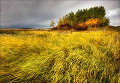 Fall in Alberta (Artvet) Tags: canada fall country alberta