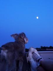 harpo and the moon