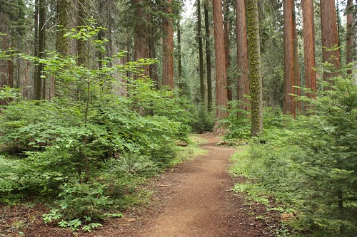 208 trail