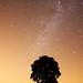 Tree par wilfried.b