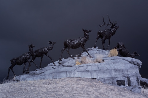 Infrared Wildlife - Grand Tetons