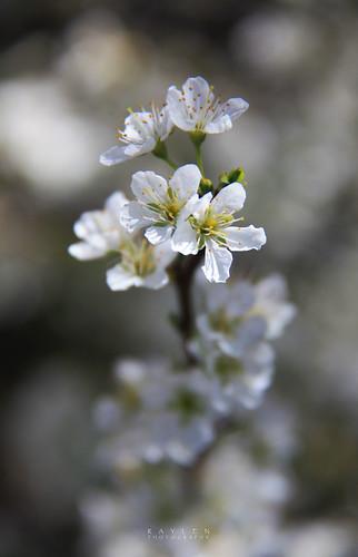 Floriade 09 - Pale Spring