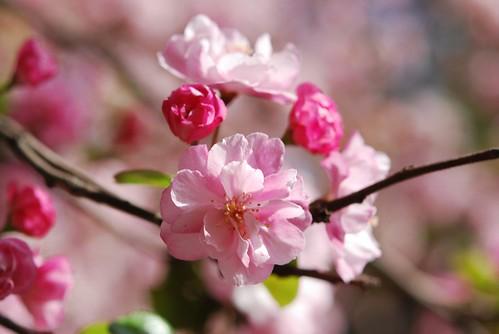 flowery finery 2, parque o'higgins