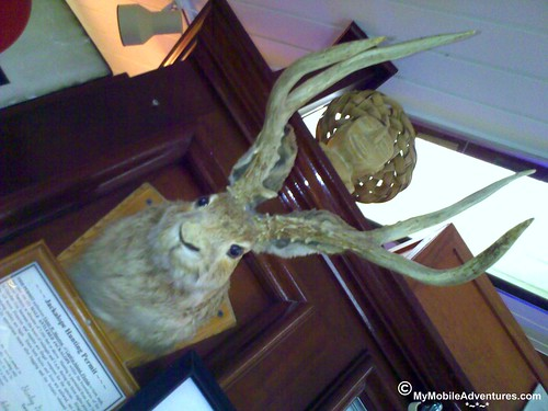 04202009020-Jackalope-on-Captiva