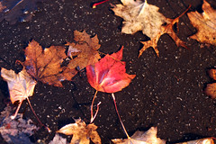 puddle leaves 2