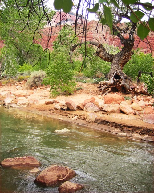 a desert river of green water and red rocks