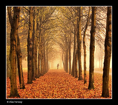 Walking with the dog (Alex Verweij) Tags: autumn trees dog mist man nature misty fog canon square bomen mood vibrant herfst foggy hond 1022mm afc almere uitlaten flickrdiamond filmwijk thesecretlifeoftrees alexverweij artofimages flickraward bestcapturesaoi