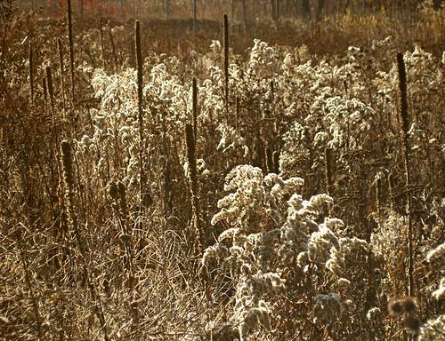 Little Folk Meadow