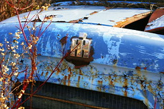 Abandoned (Dale Harrison) Tags: auto blue truck rust paint wreck wreckers mcleans