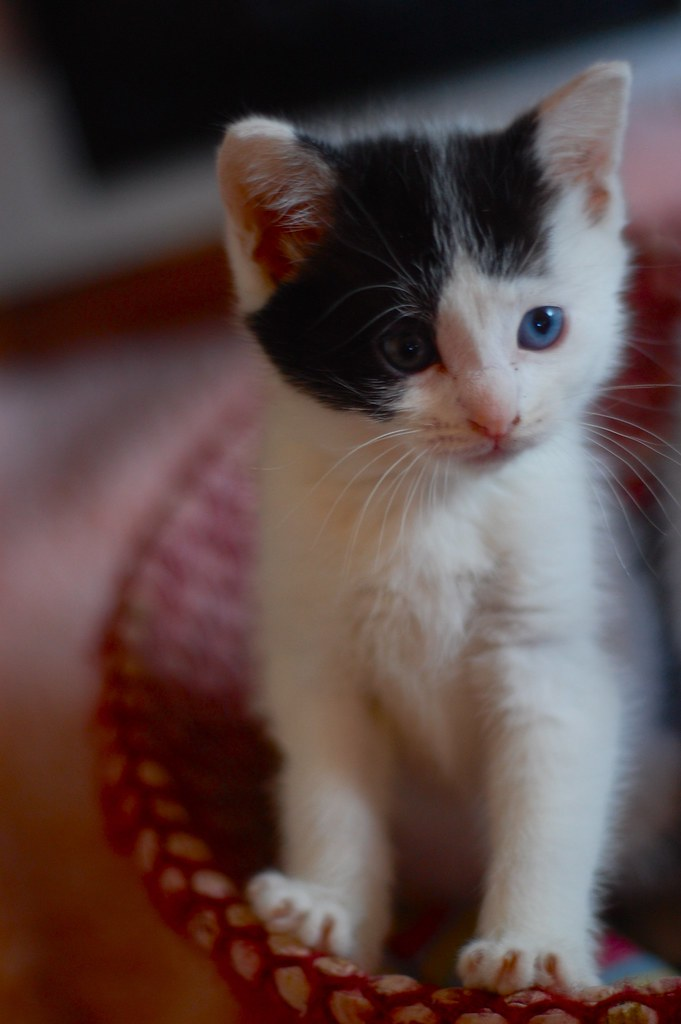 Meet Ira Finch.