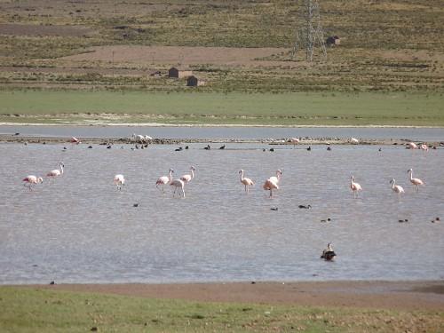 Wildlife: Unsere ersten wild lebenden Flamingios