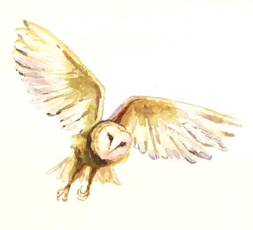 alison-owl2