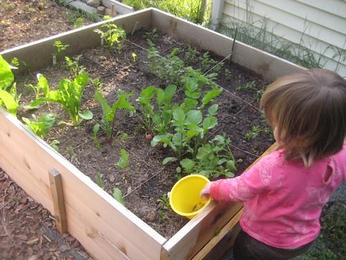lil gardener