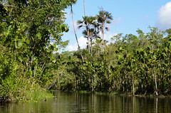Canoeing in the Amazon Basin (Ken Pick) Tags: amazonbasin ecuador travel stream 117picturesin2017 channel southamerica canoeing naporiver sachalodge
