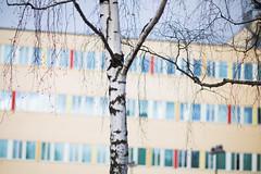 birch and rainbow (bionicteaching) Tags: sweden karlstad birch tree colors