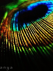 Color Display (anita anand) Tags: bird colors feather peacock anitaanand anitaanandsphotography