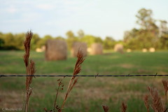 Stray Hay (Colleen Shepherd) Tags: blue summer sky green grass clouds rural america fence wire texas suburban bokeh farm country suburbia houston round hay bales polarizer barbed circular canonefs1755mmf28isusm