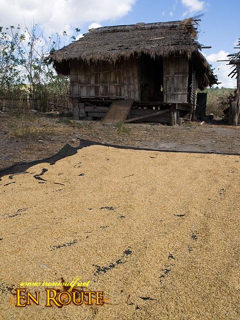 Buhid Mangyan Drying grains