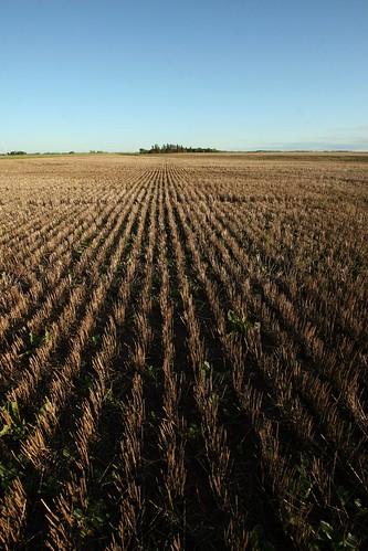 stubble-fields