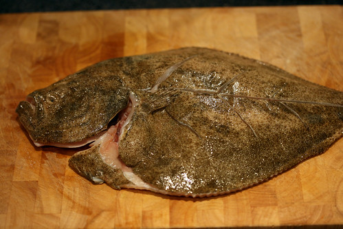 Turbot top down 2