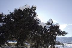 IMG_8111 (Miguel Angel Mora (GSi_PoweR)) Tags: españa snow andalucía carretera nieve nevada sunday bosque granada costadelsol domingo maroma málaga mountainroad meteorología axarquía puertomontaña zafarraya sierraalmijara cañosalcaiceria