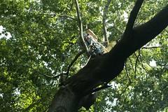 _MG_6365.JPG (zimbablade) Tags: trees sleepyhollow dougmiller videopoem