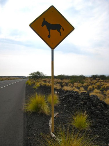 Watch for donkeys