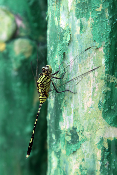 092209_dragonFly