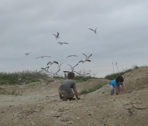 Playing in the sand while the seagulls swarmed