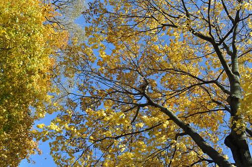 Tree Above Driveway
