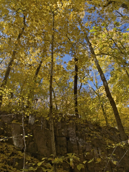 Autumn is Yellow at Devils Lake State Park