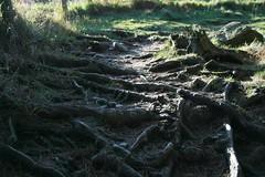 IMG_5933 (creggane_ireland) Tags: cowicklow djoucewoodandglendalough