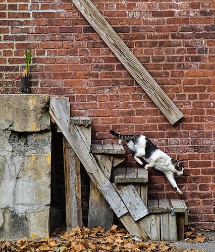 フリー画像| 動物写真| 哺乳類| ネコ科| 猫/ネコ| 階段|      フリー素材|