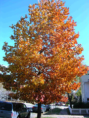 Fall Colors Boulder   DSCN0540