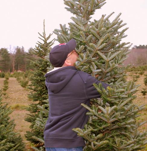 Tree Hunt 5