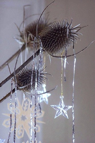 tinseled teasel by Avant-Gardenist.