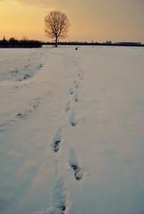 Tre passi sulla neve... (robertodotG) Tags: neve inverno freddo orme pioppo pianurapadana massafinalese