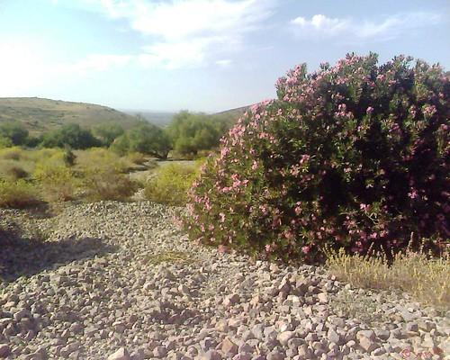 Oued Beni Znassen من وديان بني يزناسن