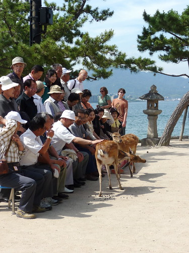 Japanese Tour Group at Miyajima Shrine