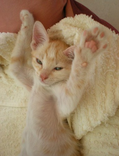 put your hands up in the air!