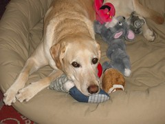 amanda's pet sitting happy client - Buddy!