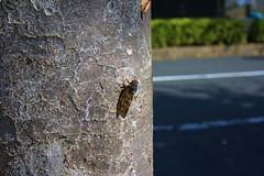 町田樹 画像52