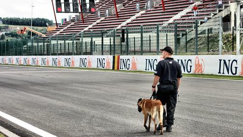 F1 dog