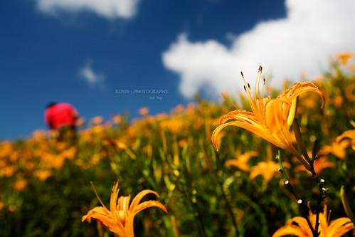 這一季的璀璨 / The colors of Summer