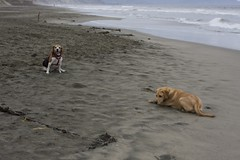 taking 5 (gjacobs228) Tags: kensington fortfunston tule kensi